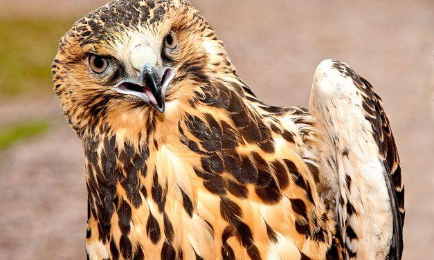 The Crestone Eagle: June 2017