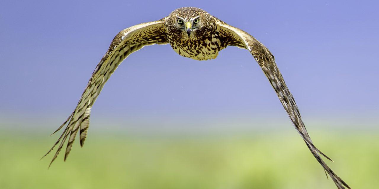 The Crestone Eagle: June 2019