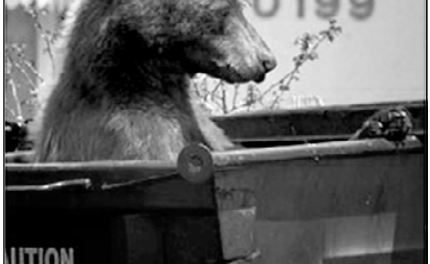 Bears active in & around Crestone; break-ins reported