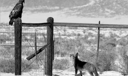 The Crestone Eagle: February 2013