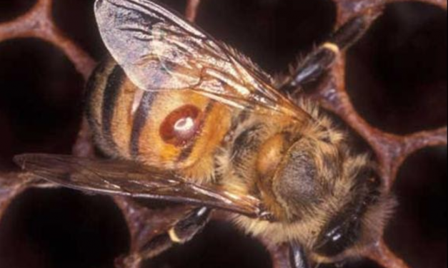 Garden Guru: What's up with the bees?